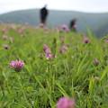 Clover Field by Brittany Galipeau