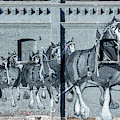 Clydesdale Mural by Todd Klassy