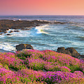 Coastal Clover Sunset by Darren White