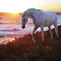 Coastal Dream by Melinda Hughes-Berland
