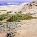 Coastal Dunes by Scott Kemper
