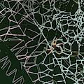 Cobwebs Creation by Robert Potts