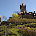 Cochem Castle And Vineyard In Germany by Victor Lord Denovan