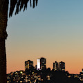 Coit Tower Twilight by Mitch Shindelbower