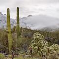Cold Desert Winter In Arizona by Dave Dilli