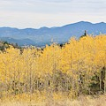 Colorado Autumn In The Mountains by Tonya Hance