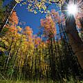 Colorado Gold by Christopher Thomas
