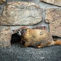 Colorado Resident by Jon Burch Photography