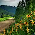 Colorado Wildflowers by John De Bord