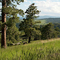 Colorado Woodland Foothills Spring Landscape by Cascade Colors