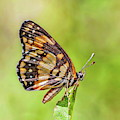 Colorful Butterfly by Anthony Dezenzio