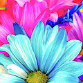 Colorful Flowers by Michelle Wittensoldner