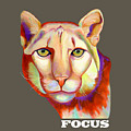Colorful Focus Mountain Lion by Jody Wright