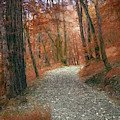 Colorful Rocky Path by Bill Posner