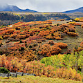 Colorful Scrub Oak And Aspen Along Last Dollar Road by Ray Mathis