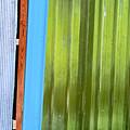 Colorful Shed Siding by Kae Cheatham