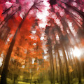 Colorful Trees Vii by Tina Baxter