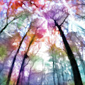 Colorful Trees Xiii by Tina Baxter