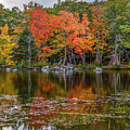 Colors On The Pond by Karin Pinkham
