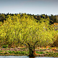 Colours Of Spring #i6 by Leif Sohlman