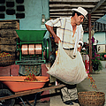 Columbia, Farmer Pouring Sack Of Coffee by Livia Corona