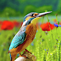 Common Kingfisher by Dean Wittle