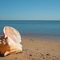 Conch On The Beach by Mark Duehmig