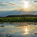 Concord Ma Great Meadows Sunrise Pond Lotus Bloom Grass by Toby McGuire