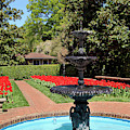 Concord Memorial Garden In The Spring With Tulips Blooming by Jill Lang
