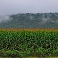 Cornfields Of Warren County by Mark Miller