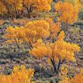 Cottonwoods In Autumn by Dustin LeFevre