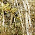Cottonwoods by Sandra Selle Rodriguez