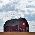 Countryside by Sally Falkenhagen