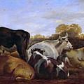Cows  by Cornelis Saftleven