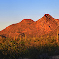 Coyote Mountains Day End by Chance Kafka