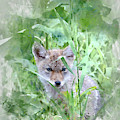Coyote Pup by Brad Allen Fine Art