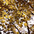 Cozy Fall Day by Carol Groenen
