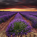 Crack Of Dawn by Jorge Maia