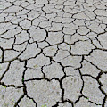 Cracked Mud by Arterra Picture Library