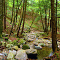 Creek In Massachusetts 2 by Raymond Salani III