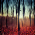 Crying Lights - Abstract Forest Scenery by Dirk Wuestenhagen