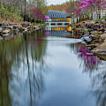 Crystal Bridges Museum River Trail With Redbud Trees by Gregory Ballos