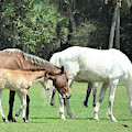 Cumberland Horses Family Portrait by Kristen Abrahamson