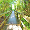 Currituck Path To The Bay by JAMART Photography