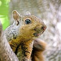 Cute Funny Head Squirrel by Don Northup