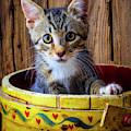 Cute Kitten In Yellow Bucket by Garry Gay