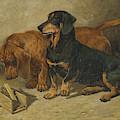 Dachshunds, 1893 by John Emms