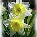 Daffodil-dwp091502002 by Dean Wittle