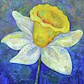 Daffodil Festival II by Shadia Derbyshire