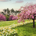 Daffodil Heaven by Jessica Jenney
